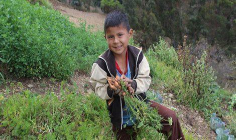 Logramos que más familias de Huallhua vivan mejor