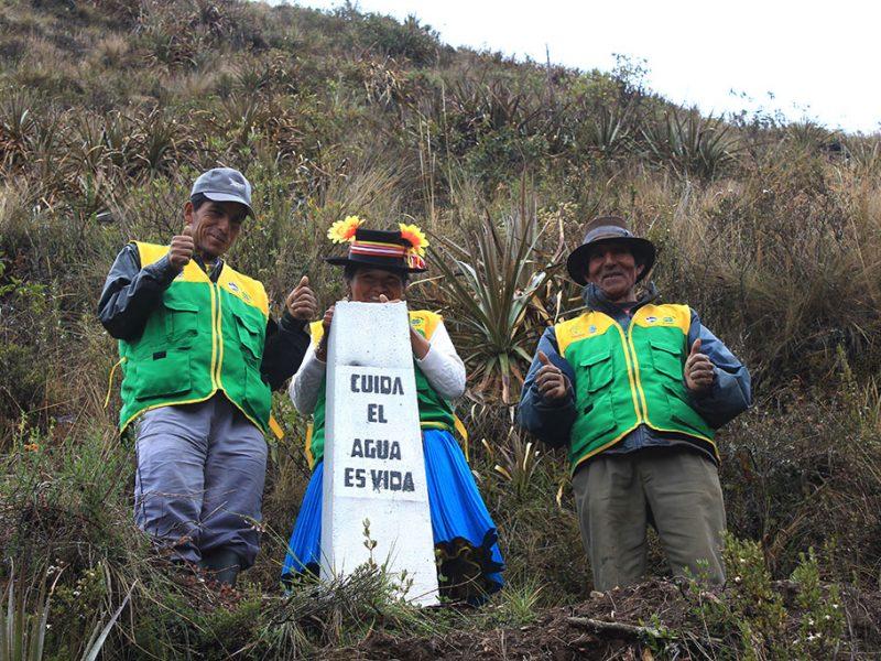reforestación medio ambiente